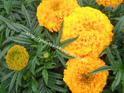 articles de phootos 44 tagg s rose d 39 inde photos de paysages aliments fleurs. Black Bedroom Furniture Sets. Home Design Ideas